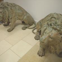 LIONS 3s